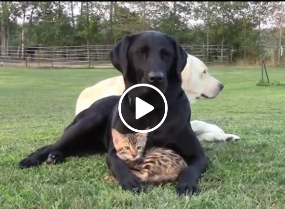 The dog and the cosy cat in the video below posted by entertainment website Ridi che ti passa show that you don't have to seek unity only in uniformity.  There can be unity in diversity.