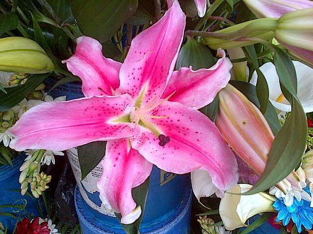 CUENCA'S FLOWER