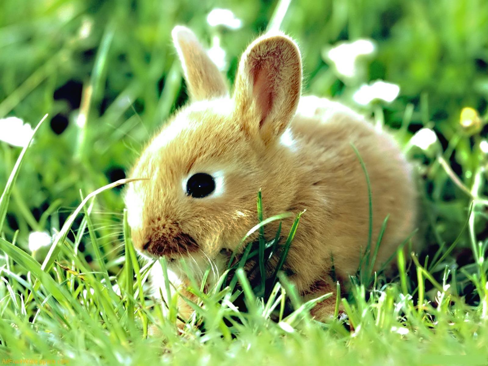 http://2.bp.blogspot.com/-E-JQ1y0Q1fM/TkYev4P98mI/AAAAAAAAC-8/IIl_KPg7TBU/s1600/bunny-1600-x-1200-animal-wallpaper-desktop.jpg