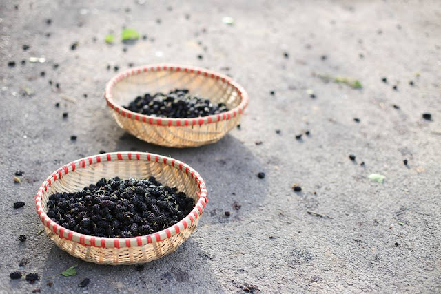 Mulberries in bamboo baskets