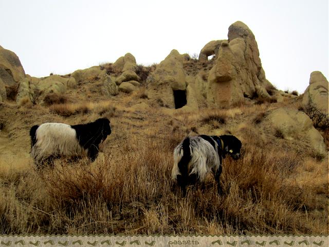 Cabras en Göreme