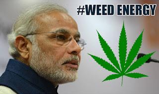modi weed energy