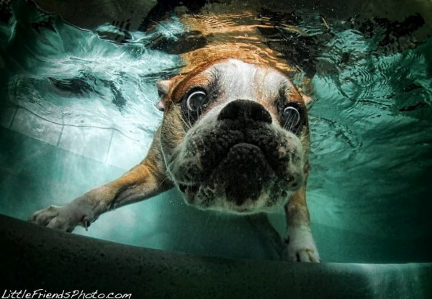 Underwater dogs by seth casteel 17 jpeg