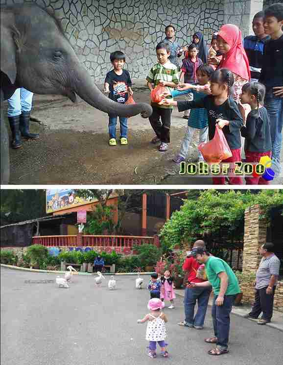 johor zoo animals