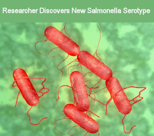 salmonella research paper Under no circumstances should the research data  the aim of this paper is to evaluate the local situation of salmonella in eggs and egg products, with a focus on.