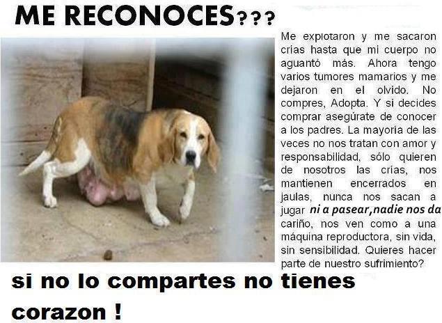 BOIKOT A LOS VENDEDORES DE ANIMALES, DIFUNDE: S.O.S. NO COMPRES, ADOPTA!!!