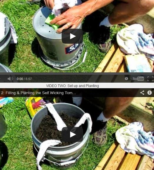 http://www.instructables.com/id/How-to-Build-a-5-Gallon-Self-Wicking-Tomato-Wateri/