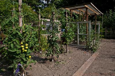Tomaten kweken buiten
