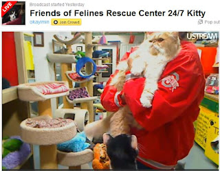 Friends of Felines Life Kitty Cam