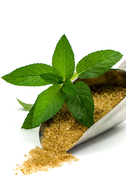 Mint and brown cane sugar peppermint with sugar close up
