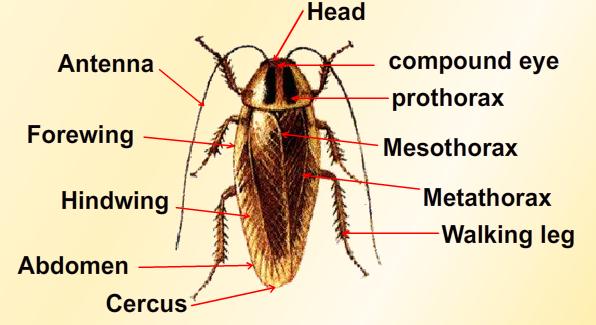 Consists 3 Bony Fish Google Sites Quaddo Science Important Diagrams From Kingdom Animalia Ix