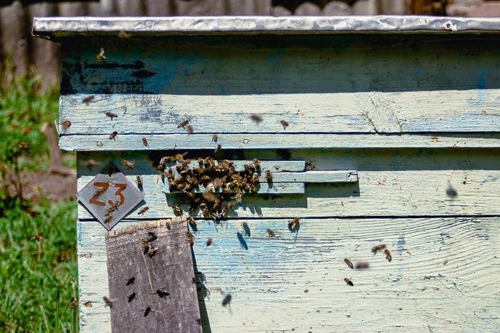 bee beehive honey homemade ukraine village countryside