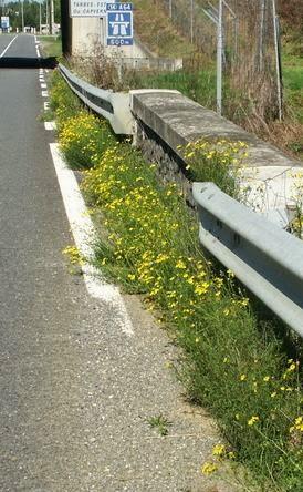 Plantes exotiques envahissantes en Midi-Pyrénées : les reconnaitre, les prévenir, les maitriser