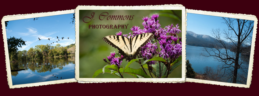 J. Commons Photography
