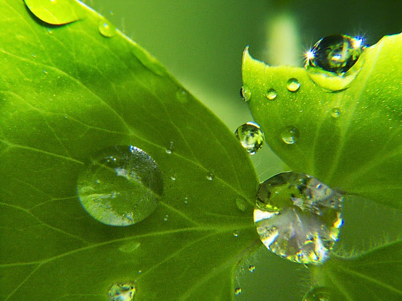 قطرات الندى على النباتات