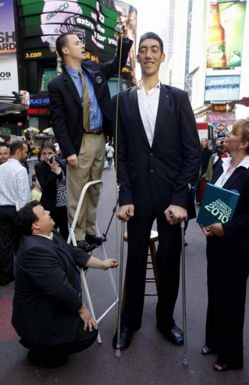 Pria tinggi