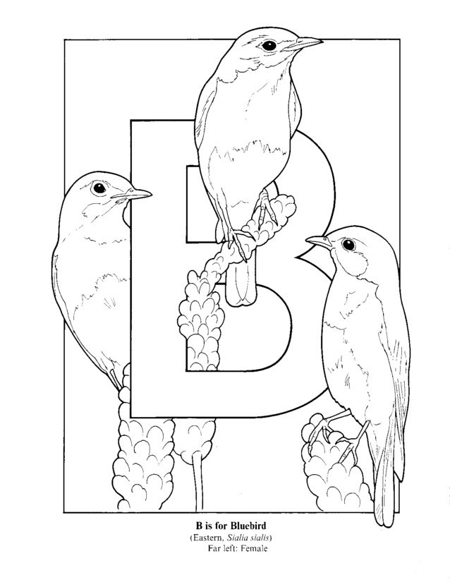 Coloring Pages For Kids Coloring Page Letter B