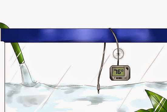 World of tanks fan 39 s blog interesting pet the series 4 for Betta fish tank temperature