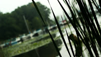 dutch angle of a boat dock seen through some reeds