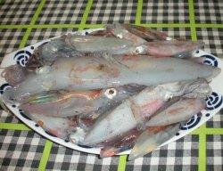 Calamares pescados por...