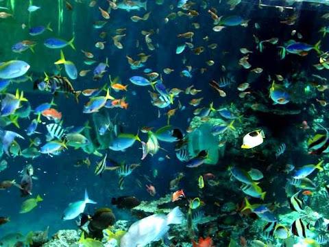 Akuarium Laut, Okinawa