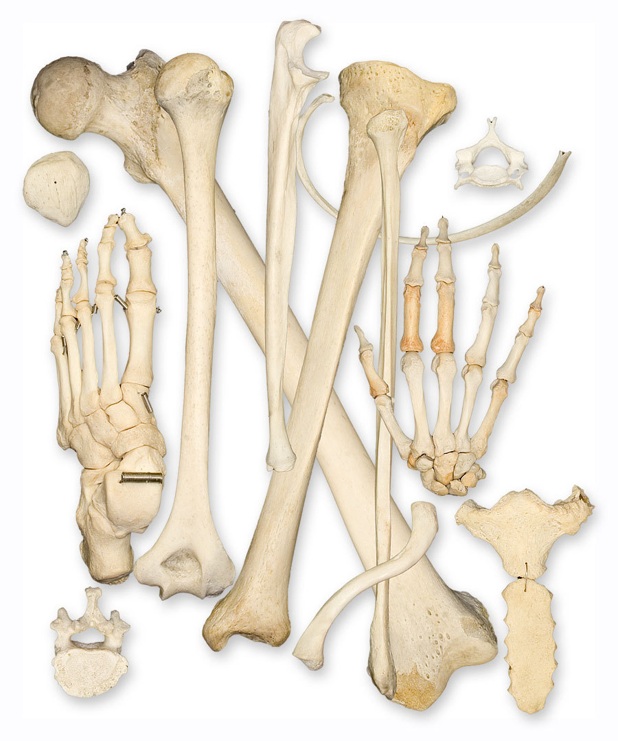 body and bones Episode recap bones on tvcom watch bones episodes, get episode information, recaps and more.