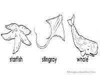 Mewarnai Bintang Laut, Ikan Pari Dan Ikan Paus