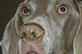 Reasons For A Dog S Nose To Be Warm And Dry