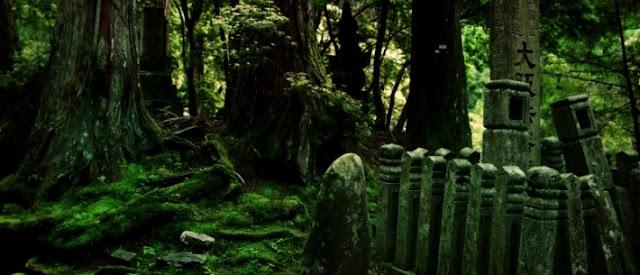 hutan dan pohon berhantu