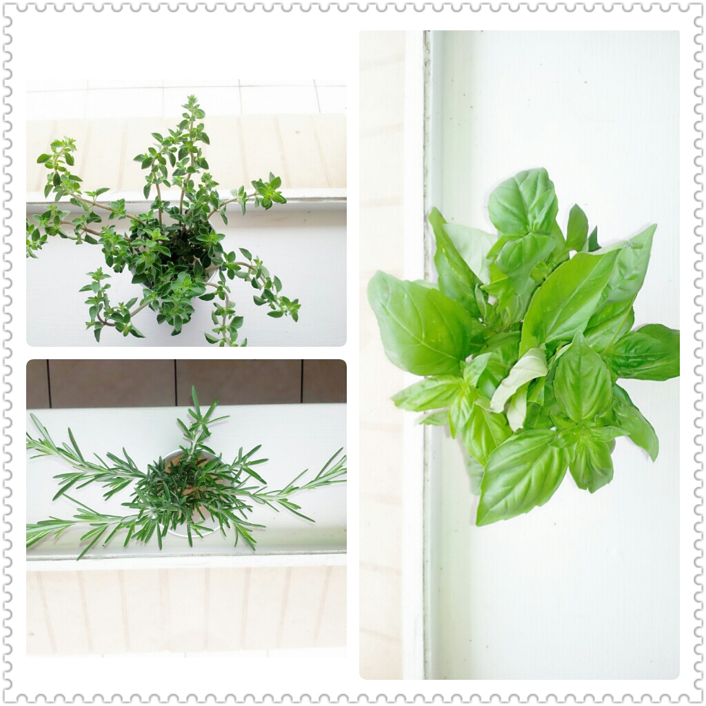 how to grow fresh herbs at home. Black Bedroom Furniture Sets. Home Design Ideas