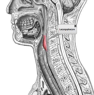 Sistema Respiratorio (Practica 1)
