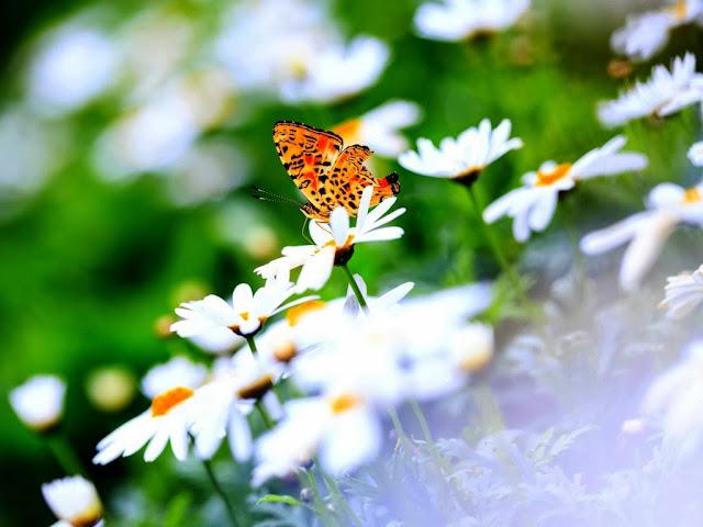 """<img src=""""http://2.bp.blogspot.com/-E4SydSPRWXY/Uq2_xjOn1TI/AAAAAAAAFjc/z6jPmcD83l4/s1600/sfd.jpg"""" alt=""""Butterflies wallpapers"""" />"""