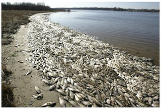 Jutaan Ikan Mati di Laut - [www.zootodays.blogspot.com]