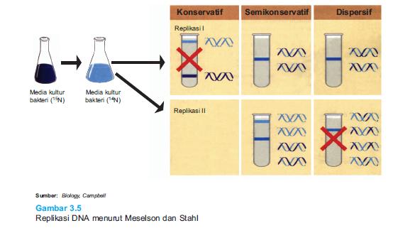 Teori Replikasi DNA