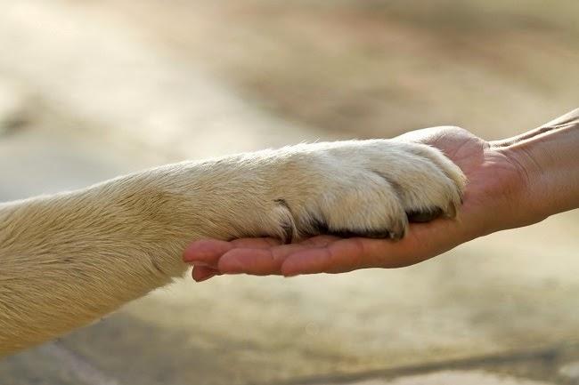 Psie zmysły