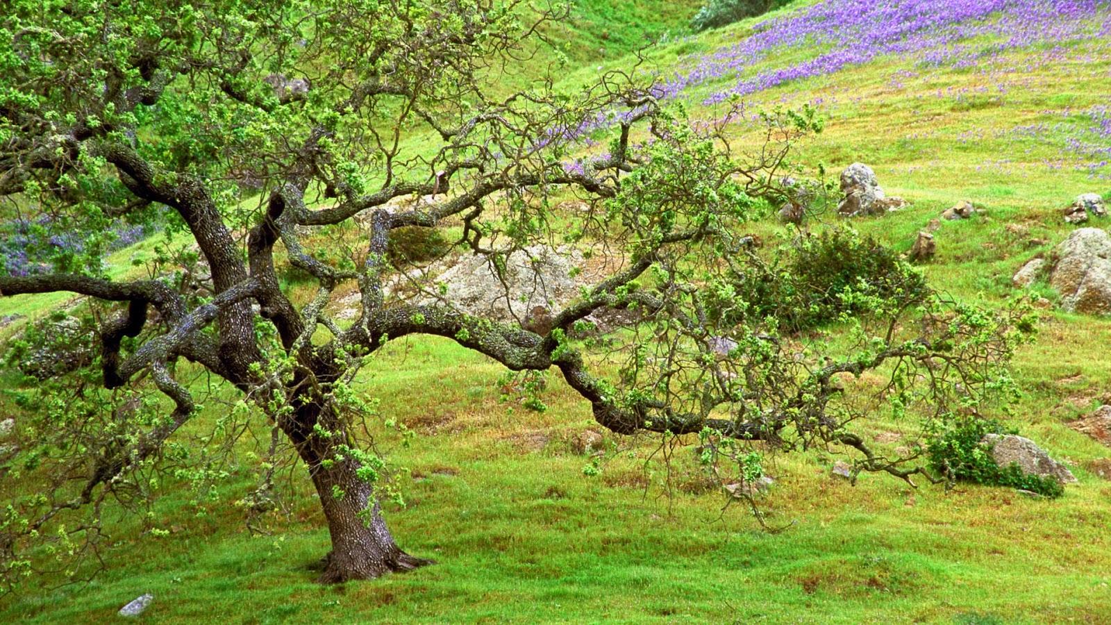 Wallpaper met bloemen en boom in de heuvels