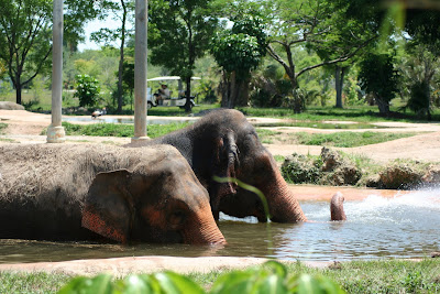 Elephants at Zoo Miami