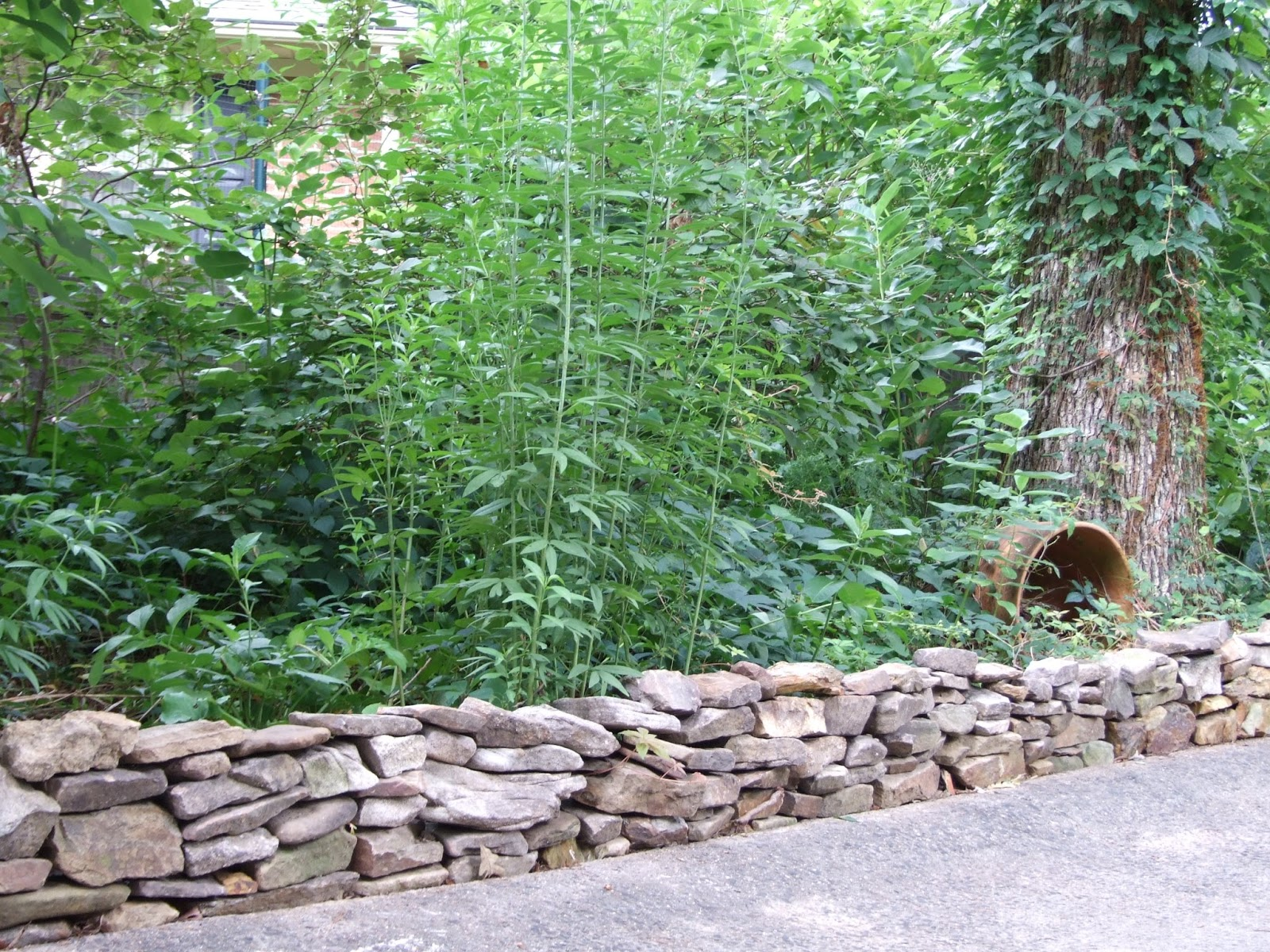 Meg s wildlife sanctuary and boot camp stone wall for Camp stone