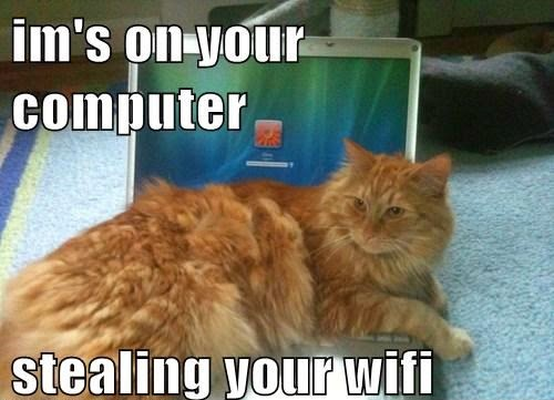 Cat stealing internet