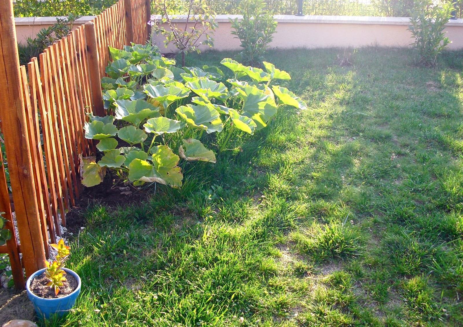 Mon petit jardin en Sologne: Création du massif Invincibelle