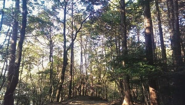 EP.9: Mori - ป่า
