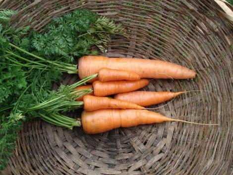 Cocinar y comer con eli repollo y zanahoria muy buenos for Cocinar zanahorias