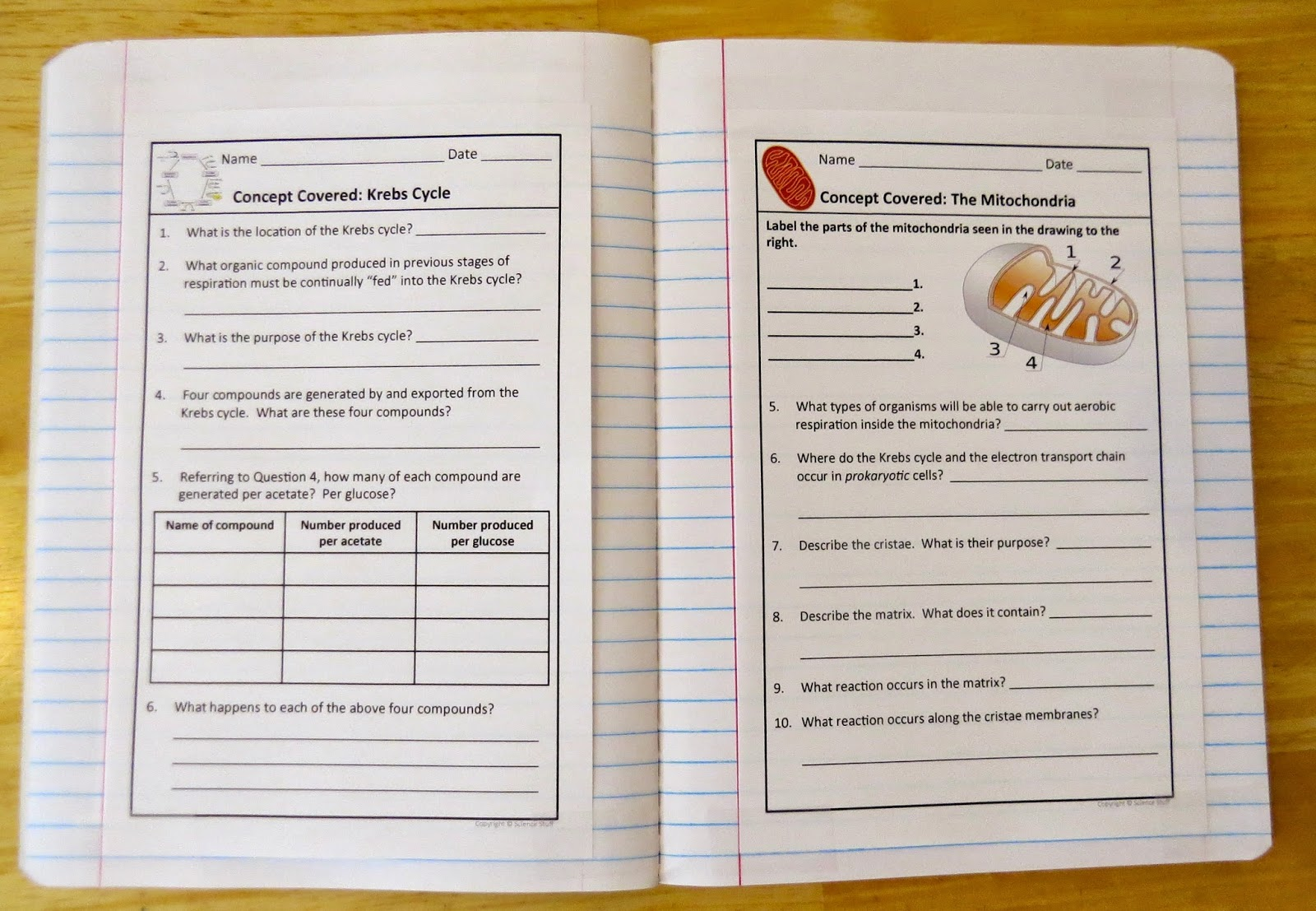 how to set up a science notebook