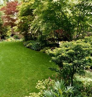 El cuidado de las plantas y el jardin 5 01 14 12 01 14 for Arboles y plantas de jardin