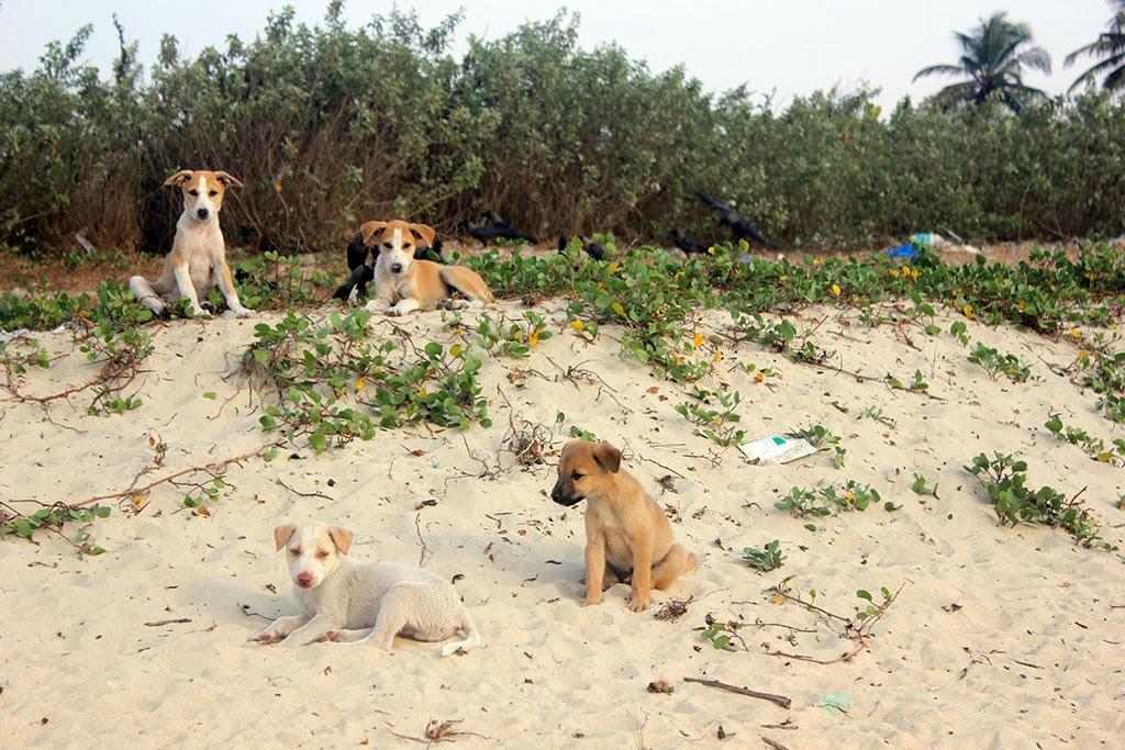 Cute puppies on the beach