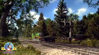 The Fat Controller steam train Henry the tank engine a woodland forest tall pine tree still standing