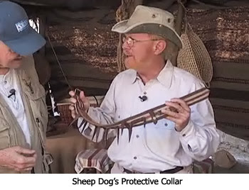 Sheep Dog Collar