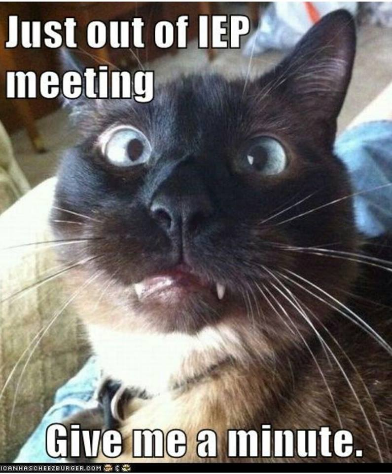 IEP Meetings