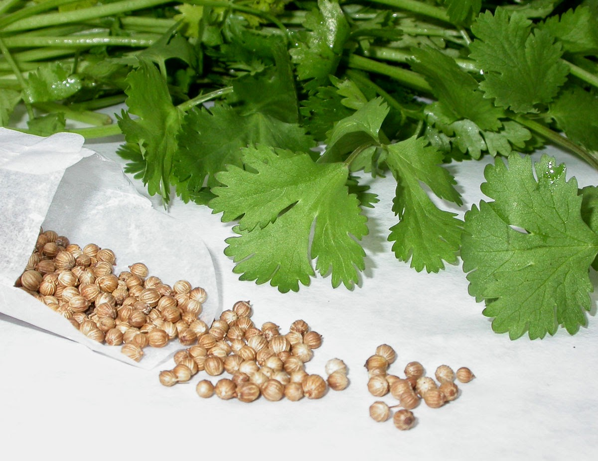Coriander vs. Cilantro: What's the difference?