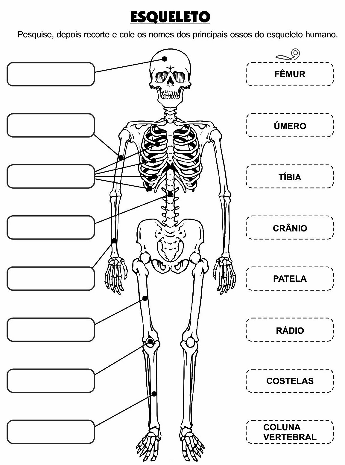 Atividade – Os Principais Ossos do Corpo Humano